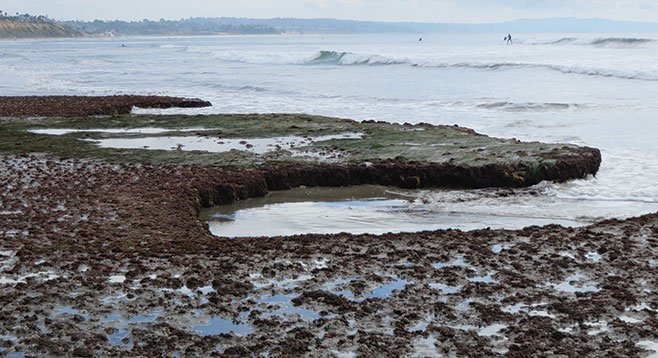Reef and tidepools