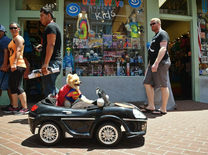 Super Dog at Comic Con