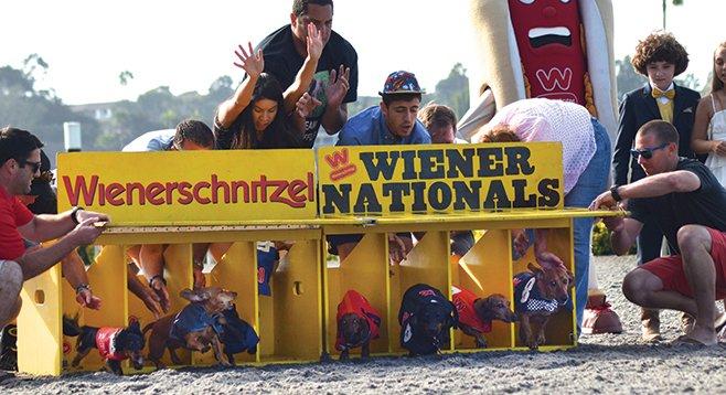 Saturday, August 30: Wiener Dog Nationals' San Diego Finals