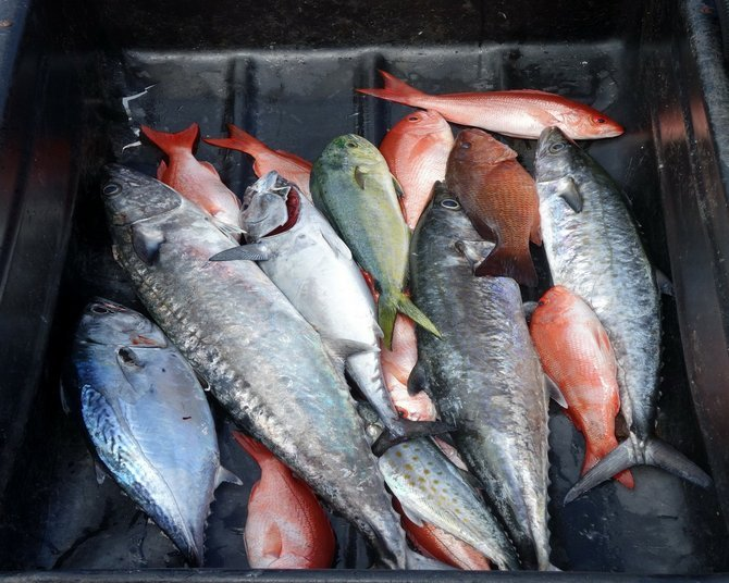 Sampling of a day's catch.