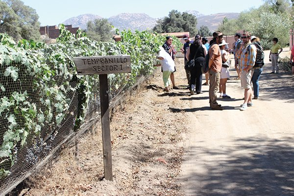 Blanco's first vintage at Casa Vinicola Ulloa debuted in 2007