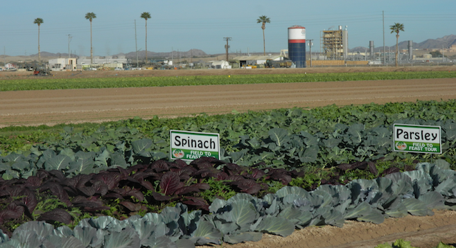 On the Field to Feast tour at the University of Arizona's experimental farm in Yuma.