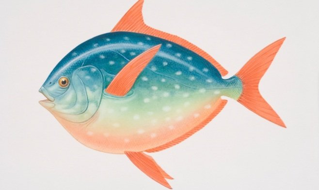 Illustrated side view of an Opah (Lampris guttatus), with large eyes, an oval silvery blue body and deep red fins - also known as the moonfish.