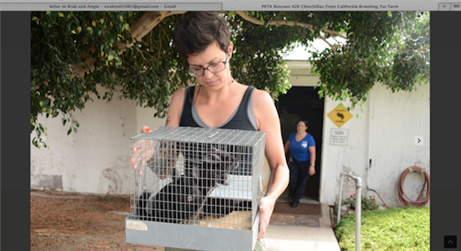 Image from a PETA video documenting alleged rescue