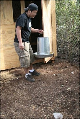 Feeding the chickens in El Cajon