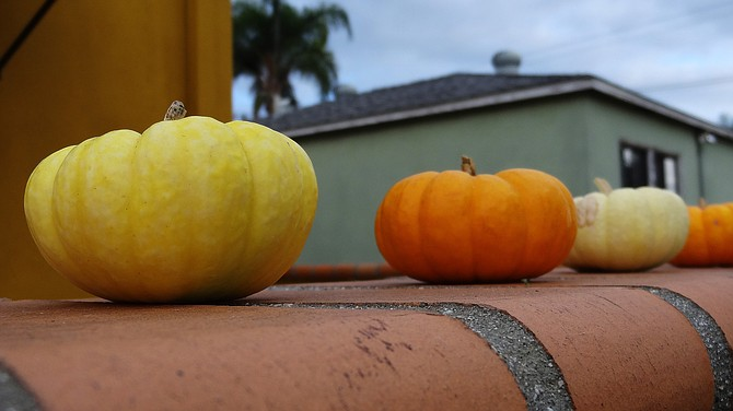 Pumpkins on a wall outside a house in North Park