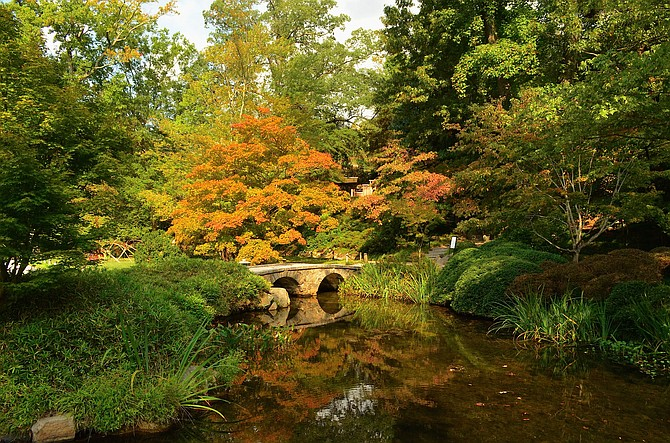 James Henry Dooley's Japanese Garden at the Maymont Estate in Richmond, Virginia.  Early October 2014.  An awesome 100-year-old Japanese Maple behind the bridge.