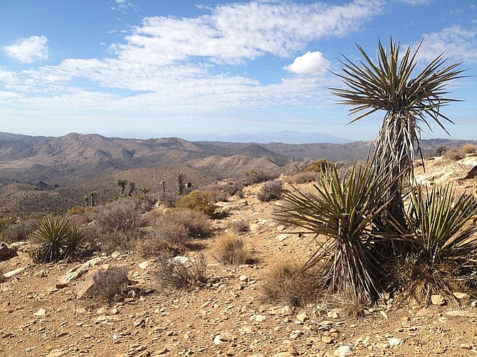 View from Ryan Mountain.