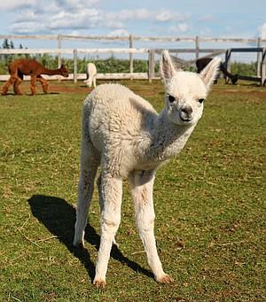 Three-week-old Jordi is curious to meet visitors.
