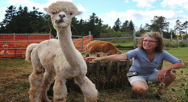 Janet Ogilvie shows off Shilo, one of her female alpacas.