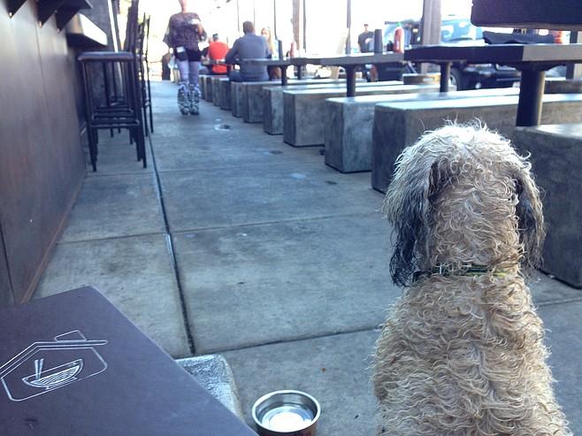 My Wheaten surveys the vast, dog-friendly domain.