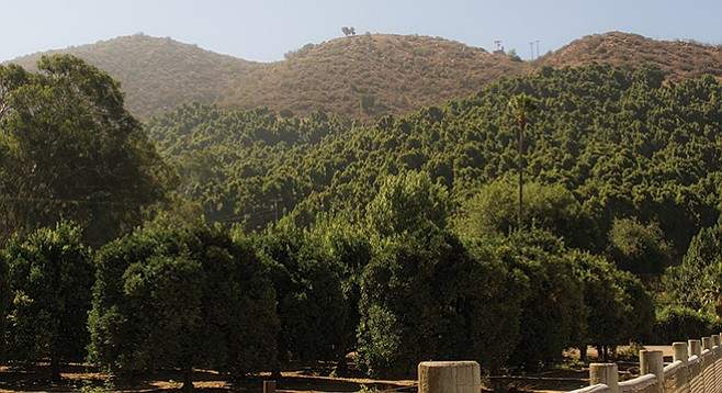 Avocado and citrus farms are in the agricultural preserve