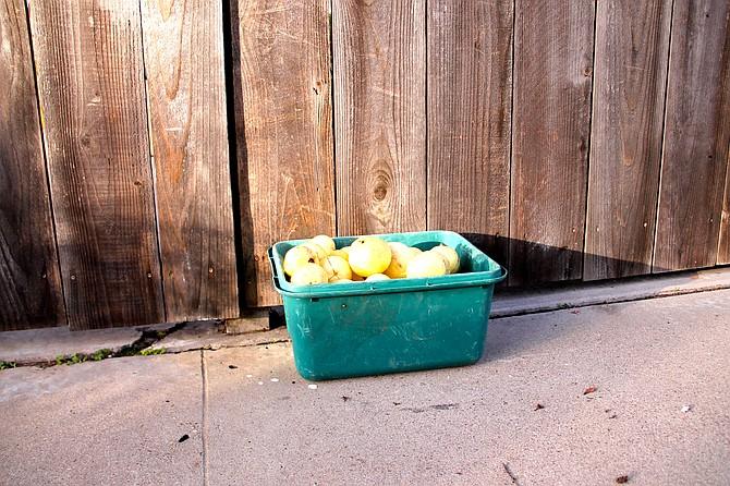 """Free Guavas"" December 2014 Photo by Ashley Elizabeth Kendrick"