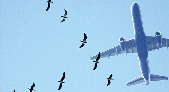 A crew reported taking evasive action from seagulls that were in their flight path when departing Lindbergh Field in August.