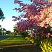 Balboa Park Blooms