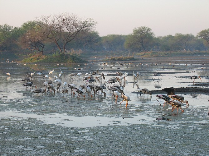 wild birds India