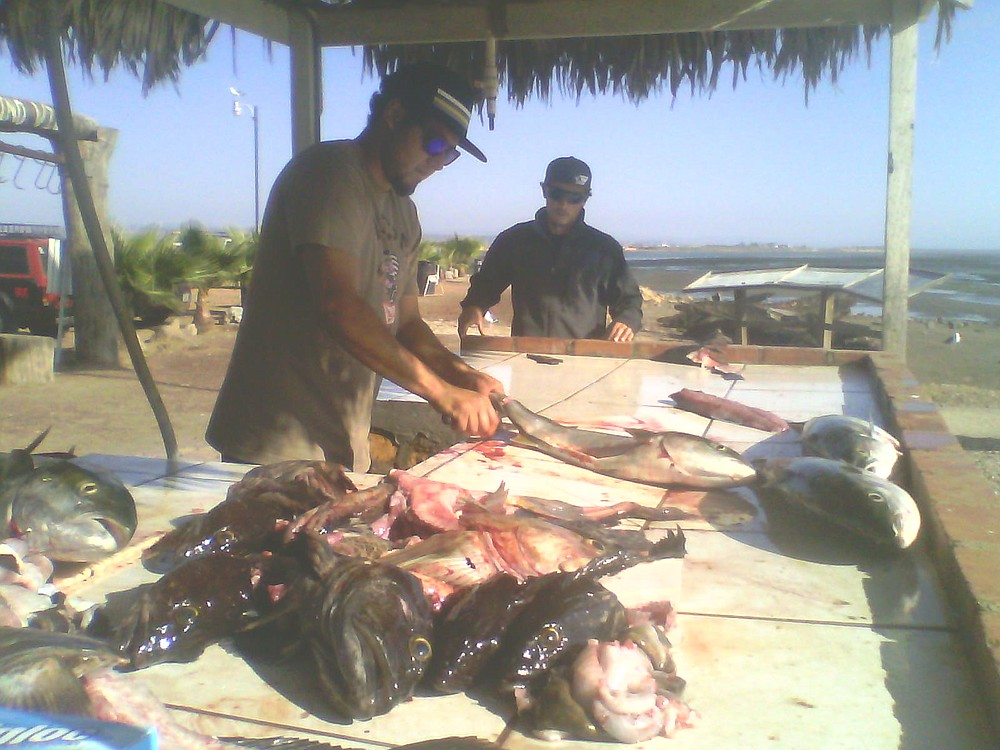Oscar of K&M Sportfishing cutting 'em up right for the clients
