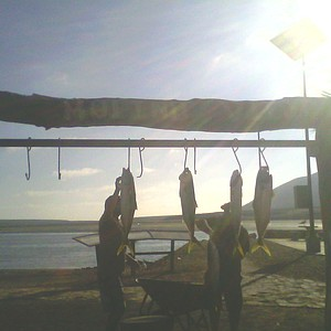 Hangin' Yellowtail for the clients