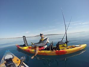 Homeguard yellowtail caught while kayak fishing in La Jolla.