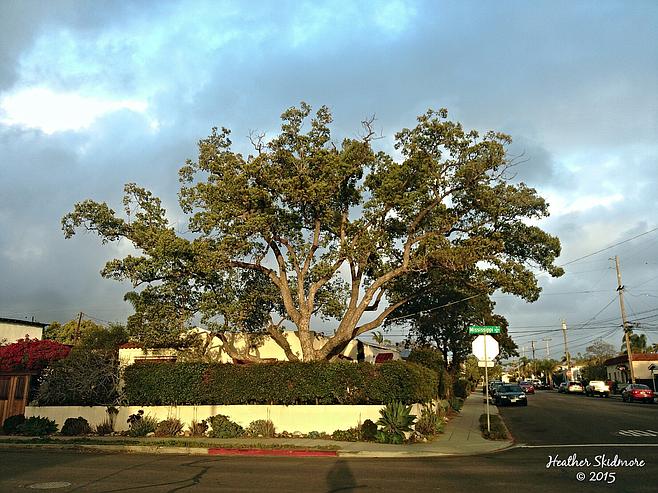 North Park photo