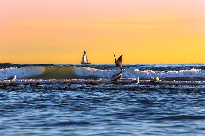 A pelican swallows its fish mimicking a sailboat in the distance  Photo by Blake DeBock  www.debockphoto.com