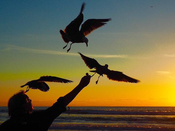 Sunset fun with seagulls