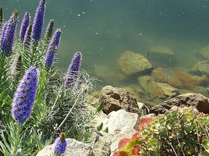 Beautiful Morro Bay, CA
