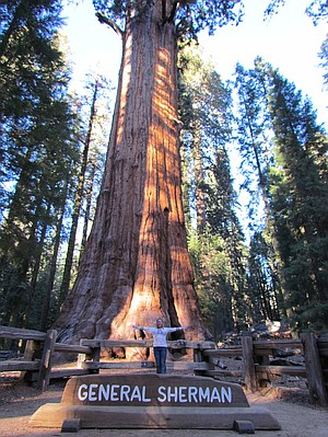In front of General Sherman, the largest tree (by volume) in the world.