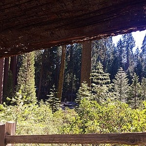 Framed view of the forest on the General Sherman trail.
