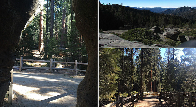 Clockwise from left: A through-the-trunk view of sequoias; view from Sequoia's Beetle Rock; the General Sherman trail.