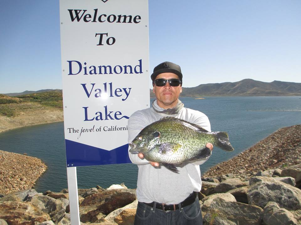 One big sunfish san diego reader for Diamond valley lake fishing report