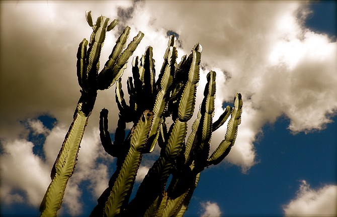 A cactus in Spring Valley.