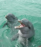The smiling girl dolphin is the one who pushed down my swimsuit!