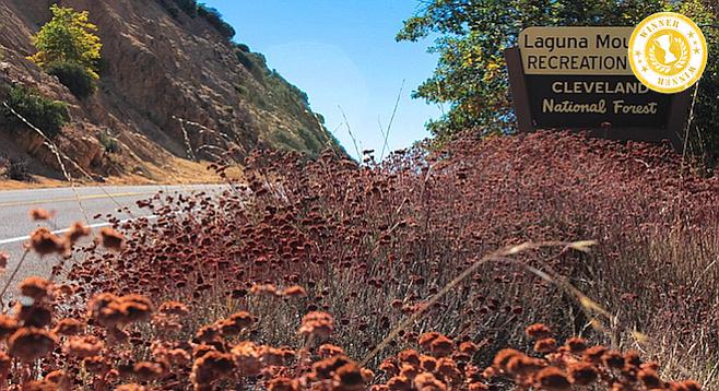 A field of rust-brown California buckwheat greets Laguna Mountain visitors.