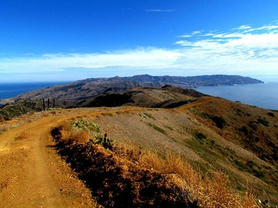 On the Silver Peak section of the Trans-Catalina trail, near Two Harbors.