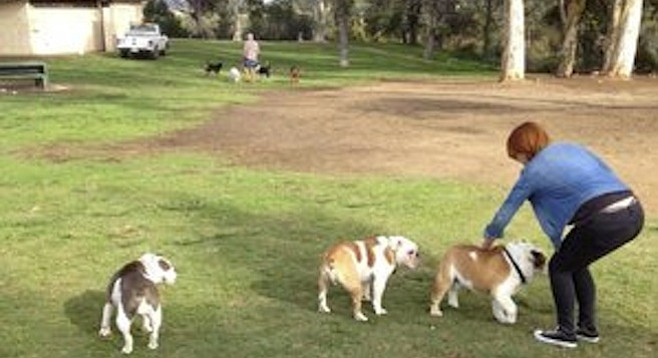 Lack of fencing offers plenty opportunity to escape Grape Street Dog Park