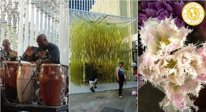 Left to right: jazz performance at the LACMA; interactive art exhibit; orchid at the downtown Los Angeles Flower Market.