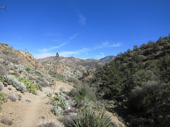 The trail meanders through a mix of desert and brushwood.