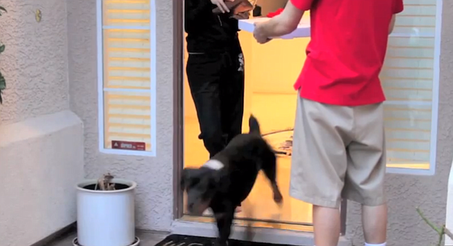 Telepet's Pet Detective notifies you within two minutes of your dog escaping.