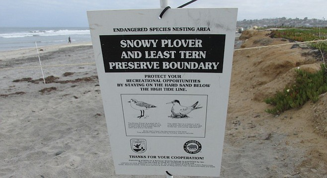 People and dogs are going to have to share some of Cardiff State Beach for a few months.