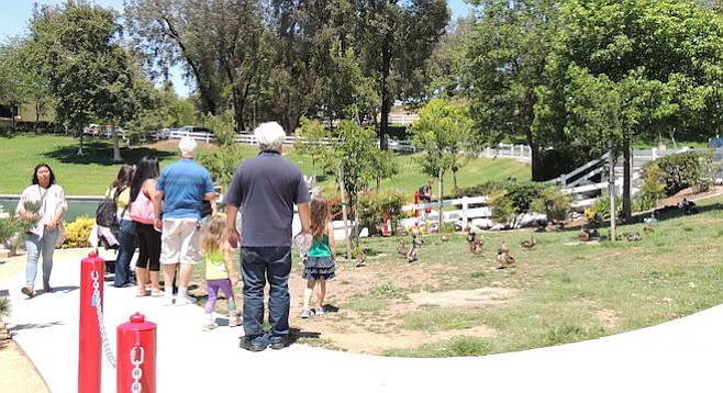 People are free to observe the ducks...and make quacking sounds if they want. But no feeding!