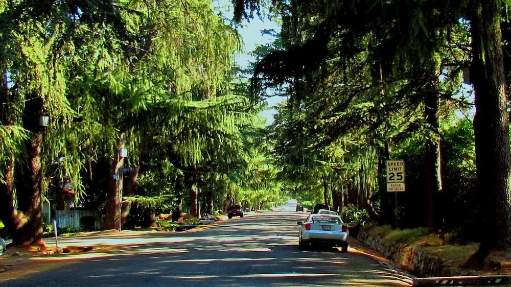 "Altadena's ""Christmas Tree Lane,"" Santa Rosa Ave."