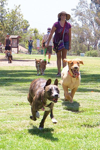 The majority of the people who use the park are responsible dog-owners.