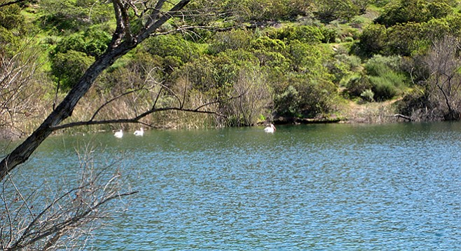 The lake is a great place to observe aquatic birds, including pelicans.