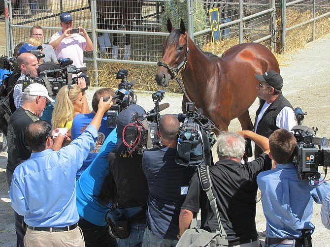 They say American Pharaoh knows he's special.