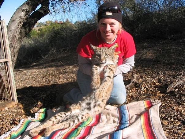 Megan Jennings and a bobcat