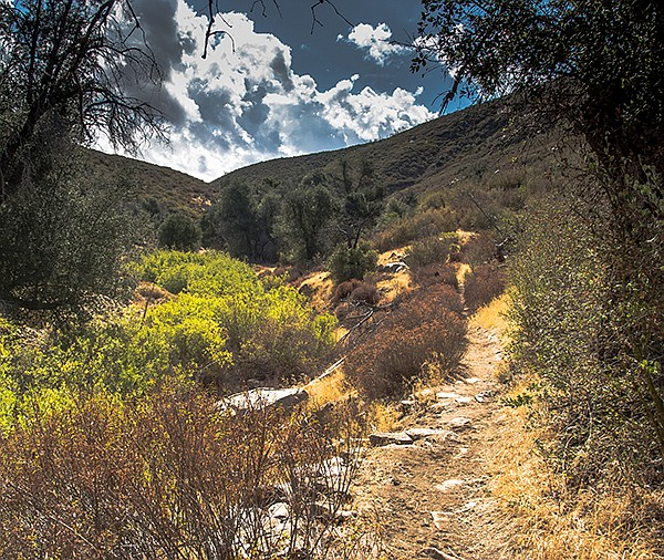 Thick riparian vegetation and oak woodland hide Harper Creek