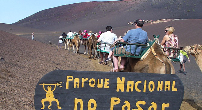 Camels are go-to transportation in Lanzarote's Timanfaya National Park.