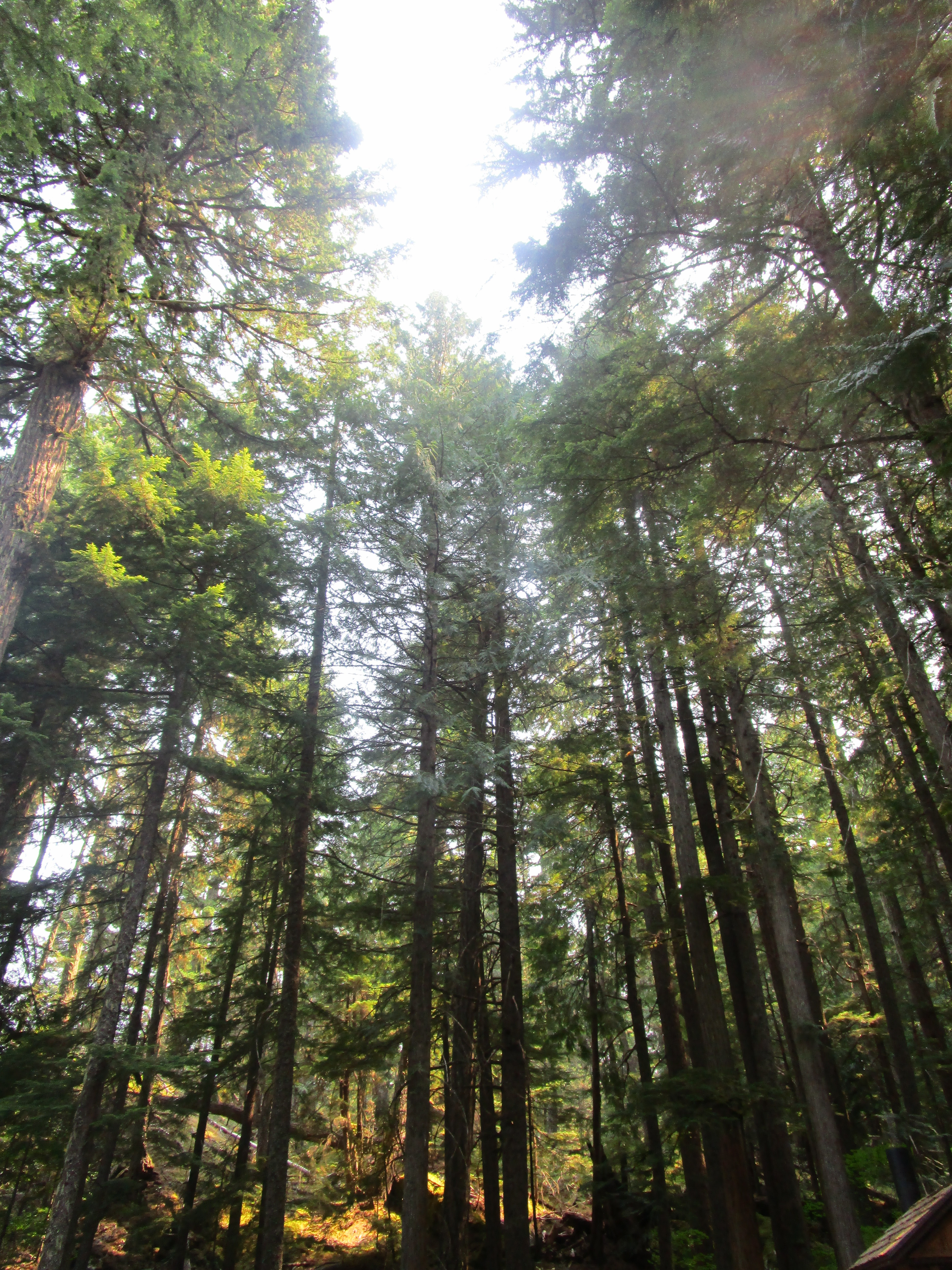 Happy Creek Forest Walk in North Cascades National Park