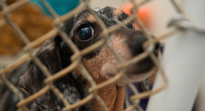 The Humane Society of the U.S. estimates there are 10,000 puppy mills nationwide.